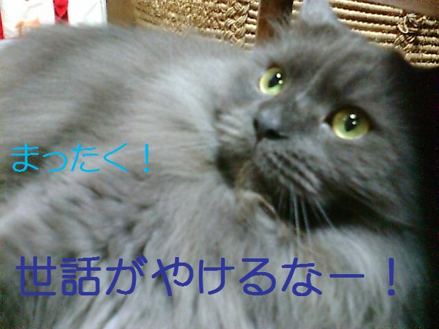 20080325004707