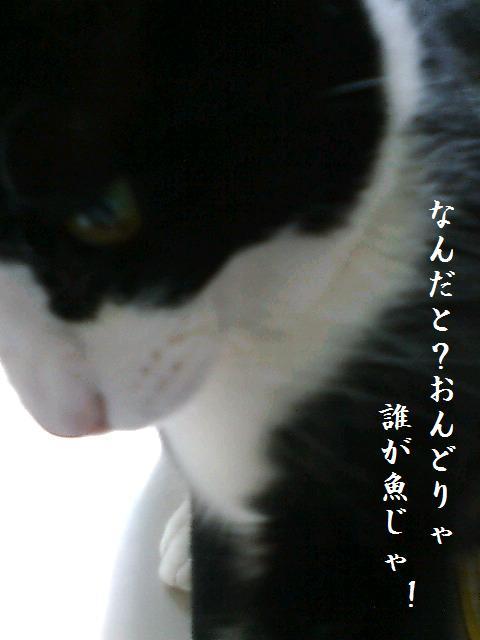 20080411124818