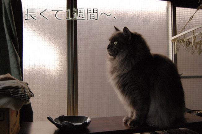 Dejiichi09021194