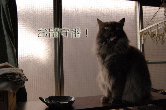 Dejiichi09021196